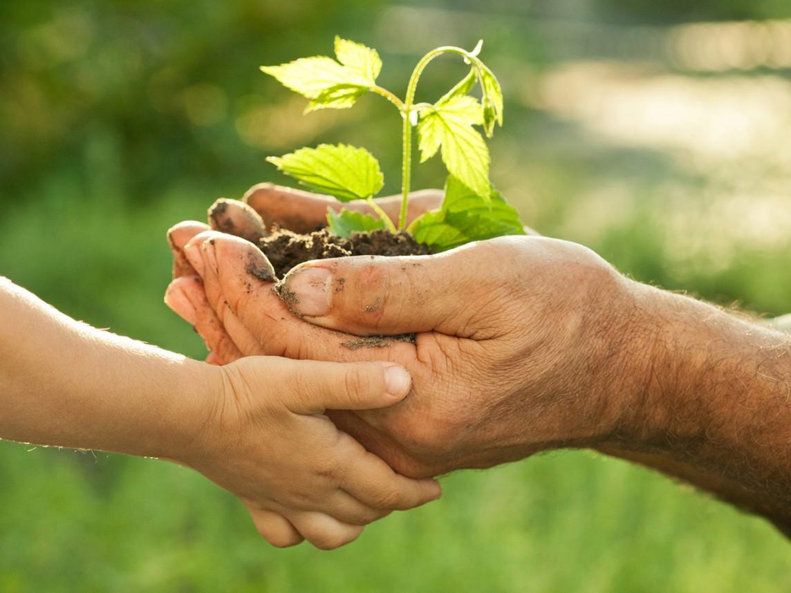 Neue Pflanze in der Hand - Scrum pflanzen